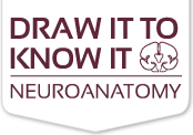 draw it to know it logo