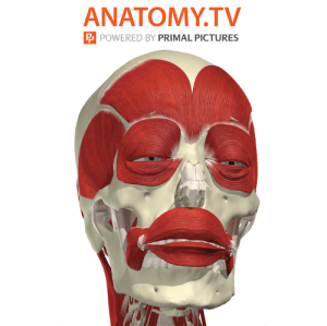 Anatomy TV logo