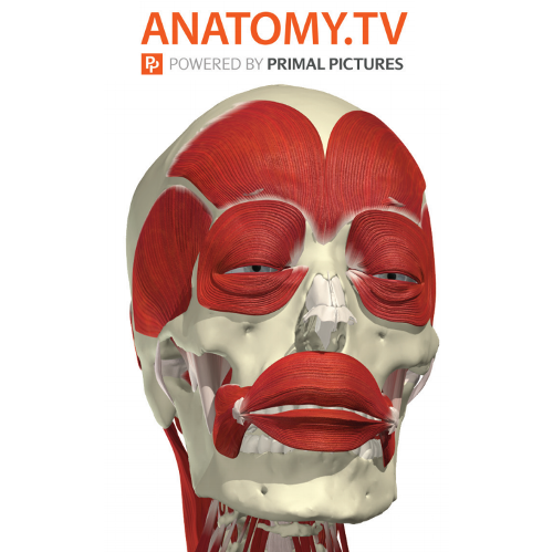 Anatomy TV logo